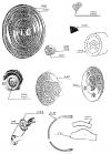 ENJOLIVEUR DE ROUE 4 trous en cuivre chromé, gravé - CITROËN A-B2-B10-B12-B14; C4... C6...